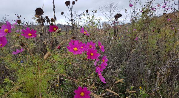 Nützlingsweide im Herbst