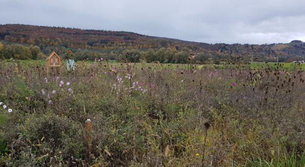 AlmaWin Nützlingsweide im Herbst